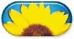 Sun Flower Summer Vibes Contact Lens Soaking Case